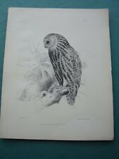 TEN Lithographs of New Zealand Birds c.1840's. some are extinct species.