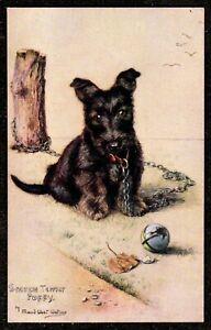 1920,s SCOTCH TERRIER PUPPY MAUD WEST WATSON POSTCARD TUCKS SKETCHES OF DOGGIES