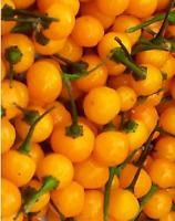 Charapita Chili 20 semillas - seeds El Chili mas caro del mundo  Aji CHARAPITA