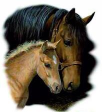 T-shirt maniche corte bianca donna uomo con disegno cavallo cavalli
