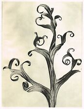 Original Vintage Botanical Karl Blossfeldt Photo Art Print 3