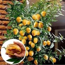 Melonensamen Melonen Saatgut Mini Süße Melonenkerne Bio Obst Hause Garten Bonsai