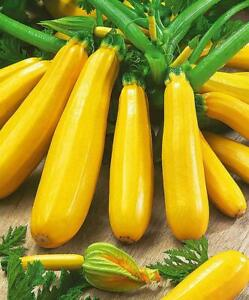 Seeds Zucchini Courgette Squash Yellow Vegetable Plant Organic Heirloom Ukraine
