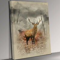 Stag Deer Staring Portrait Canvas Wall Art Picture Print