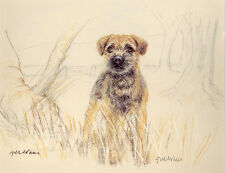 BORDER TERRIER DOG LIMITED EDITION PRINT - Signed Artist Proof - Numbered 23/85