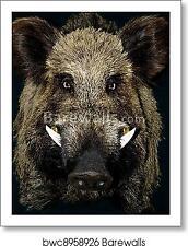 Wild Boar Art Print / Canvas Print. Poster, Wall Art, Home Decor