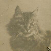 VINTAGE ANTIQUE KITTY KITTEN PORTRAIT ARTISTIC FELINE WHISKERS KIBBLES OLD PHOTO