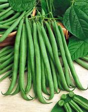 Bean Seeds, Topcrop, Heirloom Bean, Non-Gmo Bush Green Bean, Heavy Producer 75ct