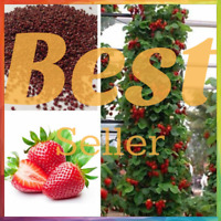 Red Climbing Strawberry Seeds Garden Fruit Plant Sweet And Delicious Houseplant
