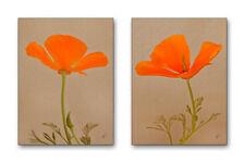 California Poppies Set of 2 8x10 Fine Art Prints Orange Botanical Floral