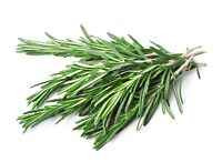 50 graines Aromatiques - ROMARIN - Rosmarinus officinalis - AROM-0016