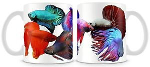Betta fish Mug fighter tropical