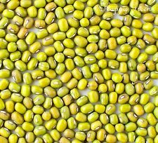 Sprouting seeds - MUNG BEAN -  50 GRAMS  Sprouts
