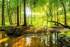 VLIES Fototapete-WALD-(4617V)-Herbst Natur Landschaft Bäume Dschungel See Birken