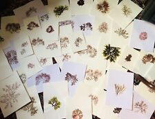Herbier Alguier Algues Marines - A Collection Of Real Seaweeds Pressed