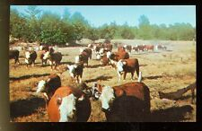 Pittsburg, Texas, Pen-Bar-D Cattle Ranch (P miscTX30