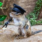 W3e Taxidermy Oddities Curiosities chipmunk military gun collectible display