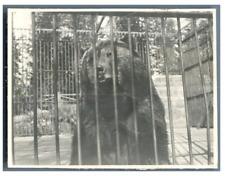 Canada, Vancouver, Zoo Garden  Vintage silver print Tirage argentique  8x11