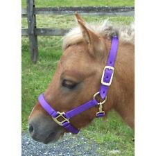 NEW Coronet Miniature Horse Nylon Halter - Large Mini, Purple