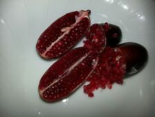 """10 VERY RARE FINGER. LIME """"DEEP RED"""" Seeds"""