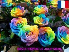10 GRAINES DE FLEURS ROSIER RARE FULL COLOR EN EXPEDITION RAPIDE DEPUIS LA FR