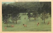 The Black Hills Of South Dakota Wild Life Postcard