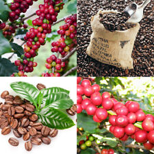 22PCS Coffee Bean Seeds Plant Healthy Home Garden Easy to Grow Decor PT141