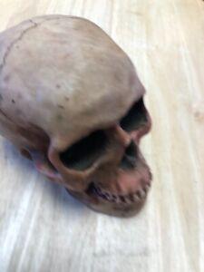Skull Figurine Lifelike Resin Art Ornament Sculpture