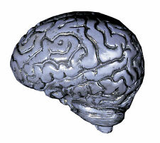 Brain Human Body Parts Grey Small Decorations & Props Distortions