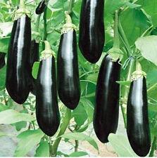 FD941 Rare Long Black Eggplant Seed Solanum Melongena Vegetable Seeds ~30Pcs~:)
