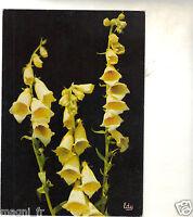 Digitales - Digitalis Grandiflora (H5773)