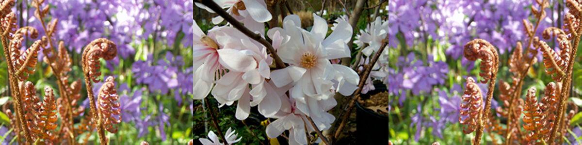 Gardens Oy Vey - An Online Nursery