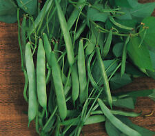 Dwarf French Bean Masterpiece - 25 seeds - Vegetable
