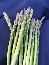 ASPARAGUS MARY WASHINGTON, TWO YEAR OLD CROWNS, BUNDLE OF 40
