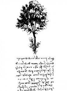 Nature Study Tree and Script Romantic Writing Stampington And Co Wooden Rubber S