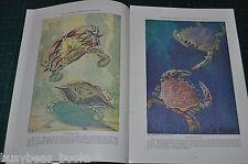 1928 magazine article about CRABS & Crablike sea creatures, color artwork