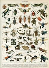Insects  Antique lithograph print...Larousse 1897