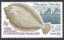 Fsat/TAAF 1995 Pescado/Naturaleza/Marine/Flounder 1v (n27853)
