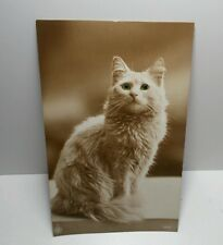"ANTIQUE POSTCARD  WHITE CAT ""REAL"" GREEN EYES GLASS OR CELLULOID"