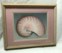 NAUTICAL FRAMED AND MATTED PRINT SEASHELL  12.5 X 15.5 INCHES