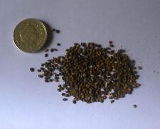 Moral negro, Morus nigra 100 semillas