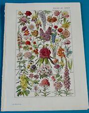 Ancienne Impression Fleurs de Jardin Coquelicot Lilas Rhododendron Laurier Rose
