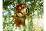 SWINGING HANGING ON A ROPE DOG PUPPY GARDEN TREE ORNAMENT FIGURE DECORATION