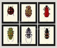 Unframed Beetle Wall Art Print Set of 6 Antique Ladybug Home Decor
