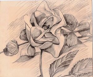 ROSE  by Ruth Freeman DRAWN IN GRAPHITE 8  X 9 1/2