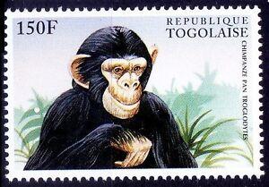Common chimpanzee, Chimpanzee Pan Troglodytes, Monkeys, Togo MNH,Wild Animals