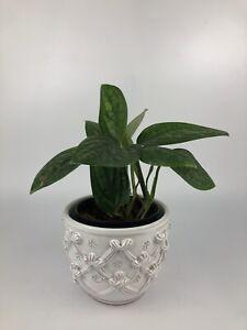 VINTAGE Italian Majolica Ceramic Planter Vase Jardiniere White