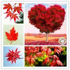 Bonsai Seeds Red Maple Tree Grow Very Rare Diy Virgo Home Garden Excluded Flower