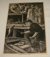 1886 magazine engraving ~ EXTRACTING LIVER FROM CODFISH