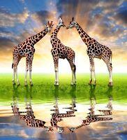 Herd of Giraffes at Sunset Wild African Nature Art Poster 20'' x 22''
